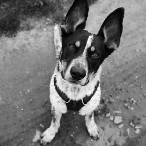 Wynagrodzenie odłowienie bezdomnego psa