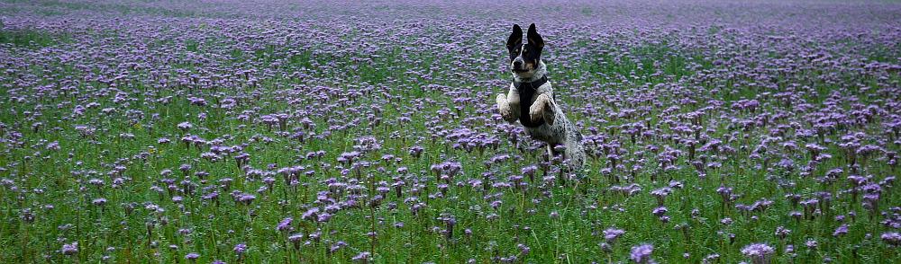Własność znalezionego psa