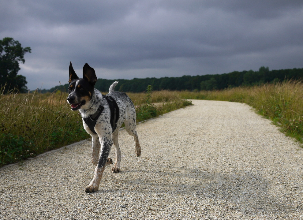 ogłoszenie o znalezieniu psa