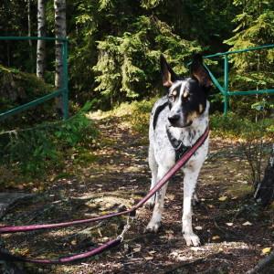 pies przywiązany w lesie