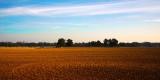 sprzedaż działki rolnej gazociąg