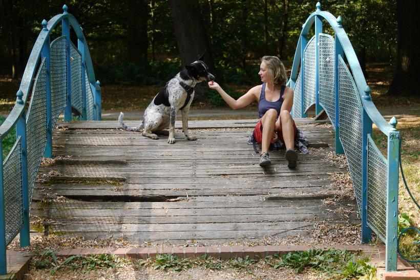 pies we Wrocławiu na smyczy