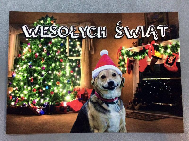 życzenia świąteczne od naszych podopiecznych