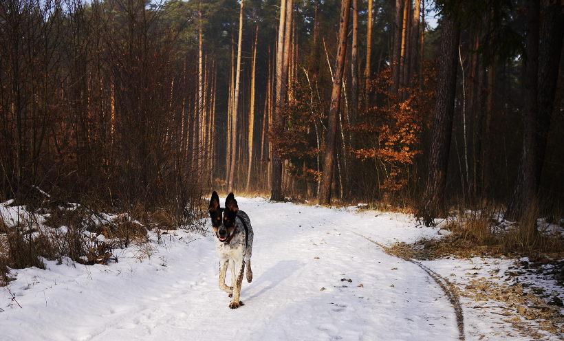 puszczanie psa luzem w lesie
