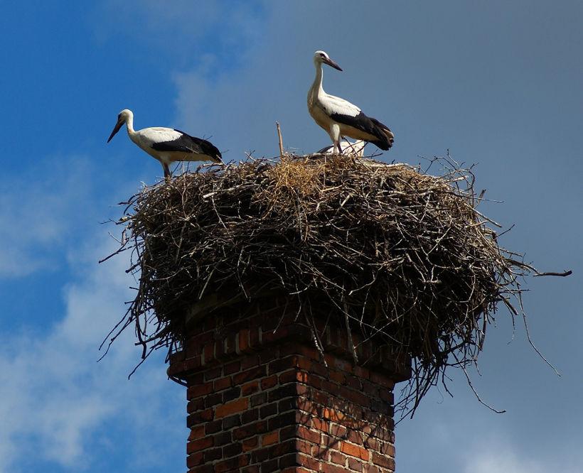 obrączkowanie ptaków znęcanie sięnad zwierzętami
