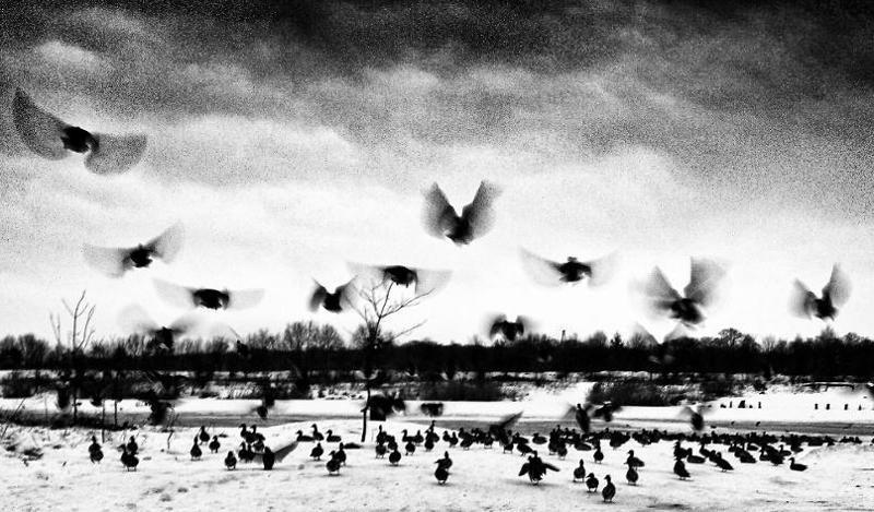 ptaki nad Odrą