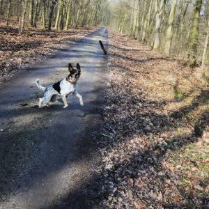 Strzelanie przez myśliwych do psów w lesie