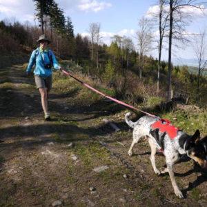 Obowiązek prowadzenia psa na smyczy