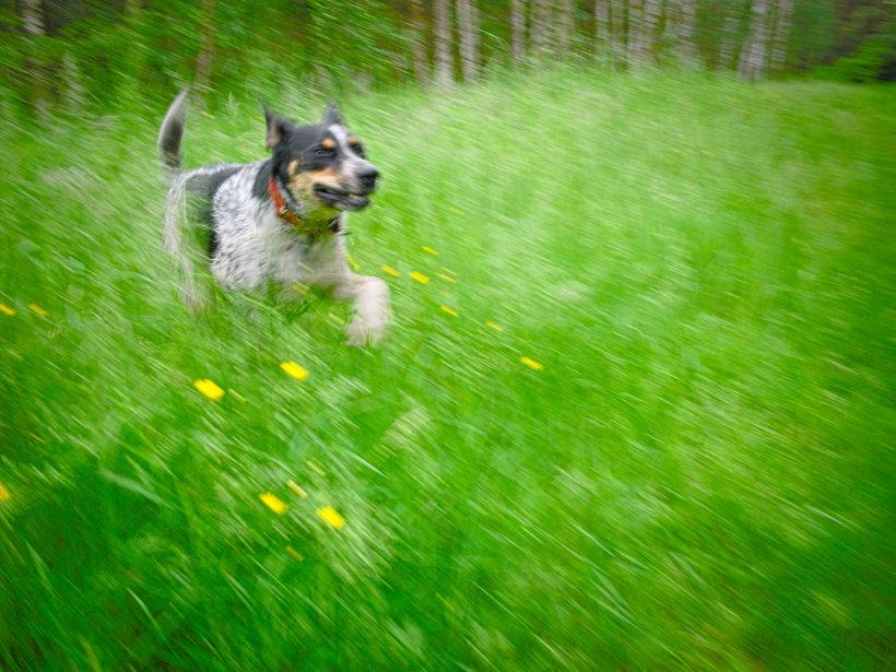 pogryzienie przez psa art. 77 kw