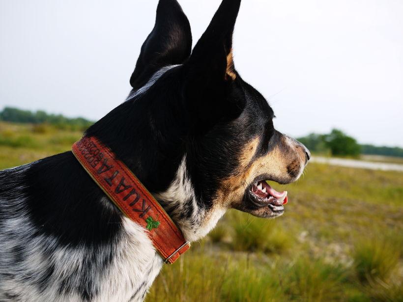 Test adresówek dla psa