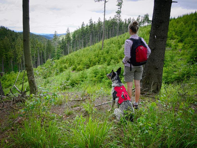 Góry Suche pies