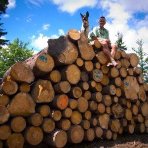 zakaz prowadzenia działalności gospodarczej po wycięciu drzewa