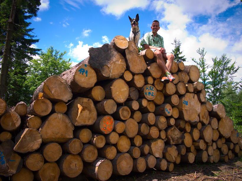 opłata za ścięcie drzewa