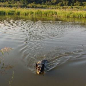 Zanieczyszczanie wody na kąpielisku