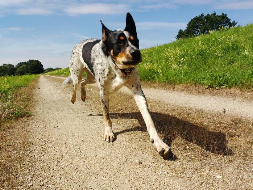 odpowiedzialnośćszkoda wyrządzona przez psa