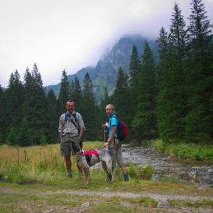 tatry słowackie pies