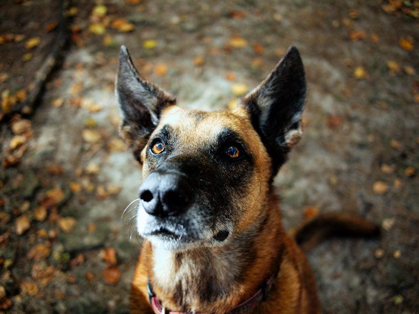 pogróżka zabicia psa groźba karalna