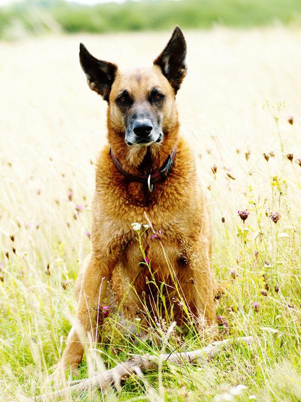 Odszkodowanie za pogryzienie przez psa