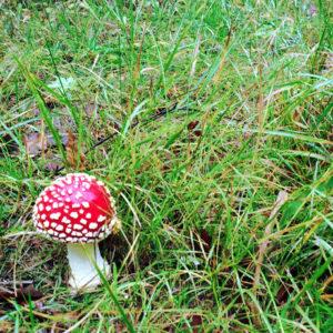 niszczenie grzybów w lesie