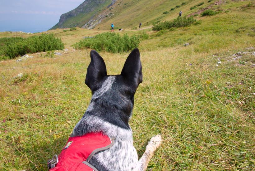 Tatry słowackie pies przepisy