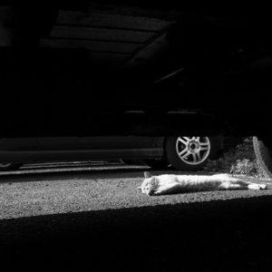 Parking dozorowany strzeżony przechowanie samochodu