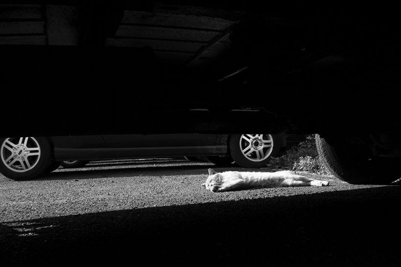 szkoda wbiegnięcie psa samochód