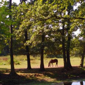 odpowiedzialność stadniny konie
