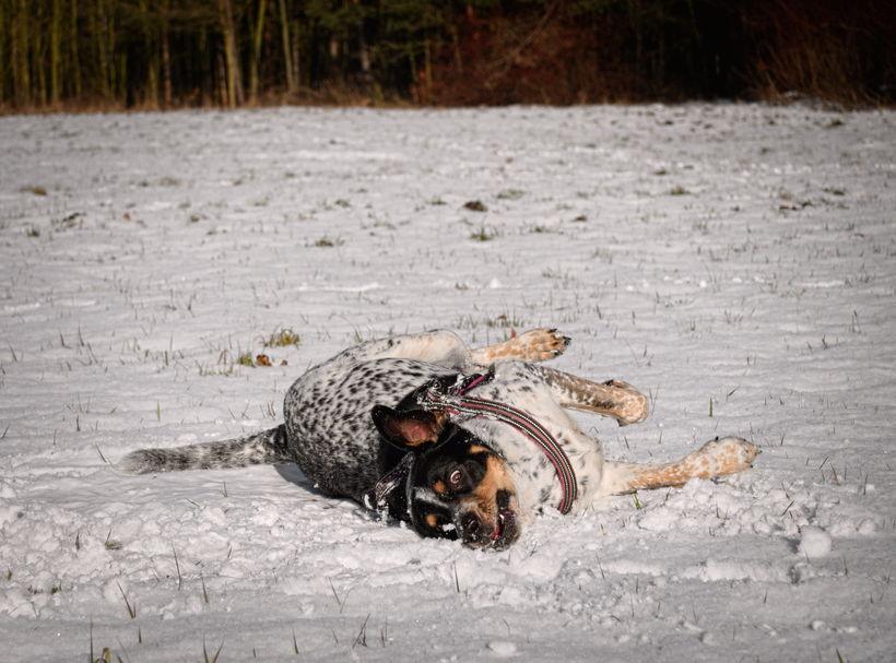 utrzymywanie psów niewłaściwe warunki