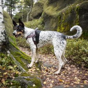 szelki dla aktywnego psa