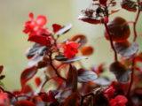 wezwanie pozew zdjęcie DZIEŃ KOBIET 8 MARCA