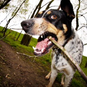 zakaz wstępu psów