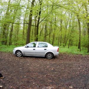 Wjeżdżanie samochodem do lasu