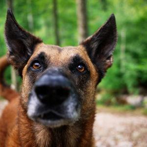 ubezpieczenie oc rolnika pies
