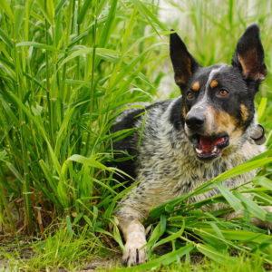 Publikacja pogryzieniu przez psa