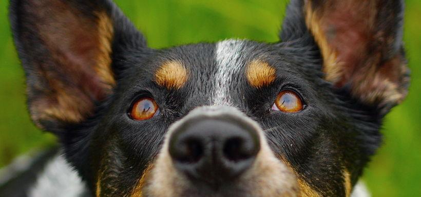 Odpowiedzialność śmierć psa odebranego