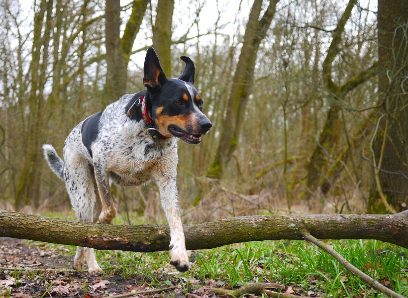 Nowelizacja kodeksu wykroczeń pies