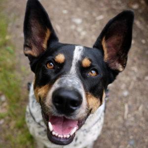 zakaz kupowania psów na targowisku