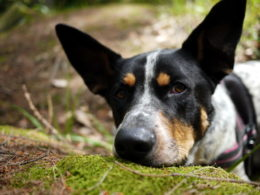 odpowiedzialnośćwbiegnięcie psa samochód
