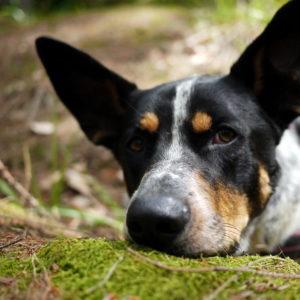 nowelizacja ustawy ochronie zwierząt