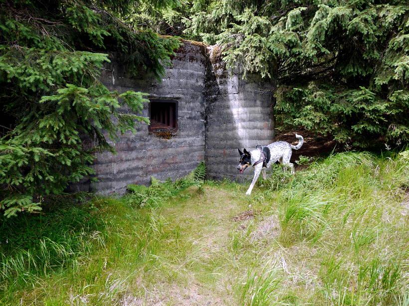 Samotny pies opuszczonej posesji