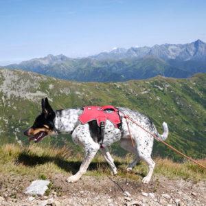 dwutysięcznik tatrach psem