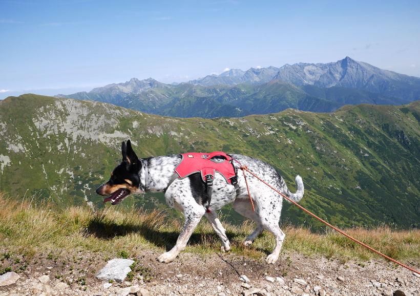 tatry zachodnie psem bystra
