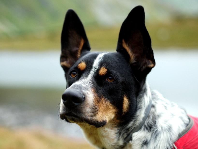 Tatry Zachodnie psem Jamnícka