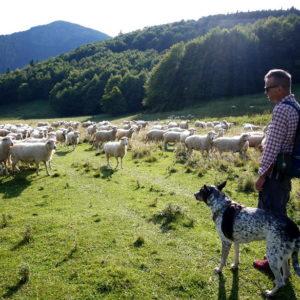 ubezpieczenie gospodarstwa rolnego pies
