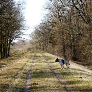 peryferie Wrocławia pies Maślice Pracze Leśnica Janówek