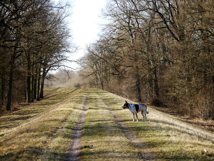 z psem wzdłuż Odry
