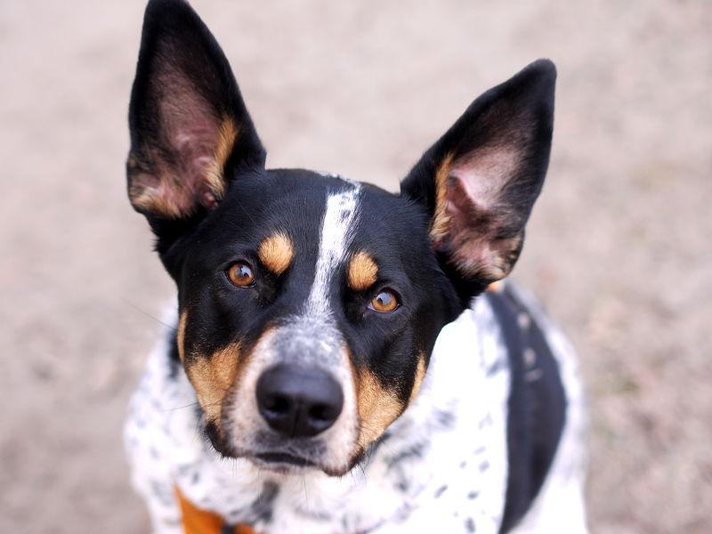 Zamieszczanie tabliczki ostrzegawczej psem