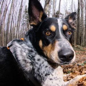 więź psem dobro osobiste