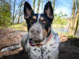 bezwzględny obowiązek prowadzenia psa smyczy kagańcu