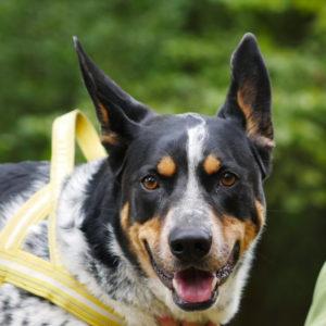 nieleczenie chorego psa znęcanie